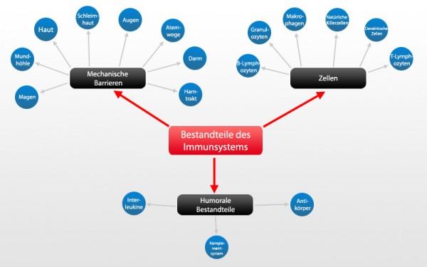 Immunsystem Bestandteile
